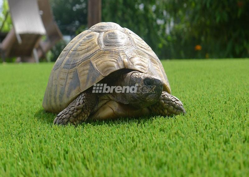 A teknős is végig megy mert tetszik neki a műfű